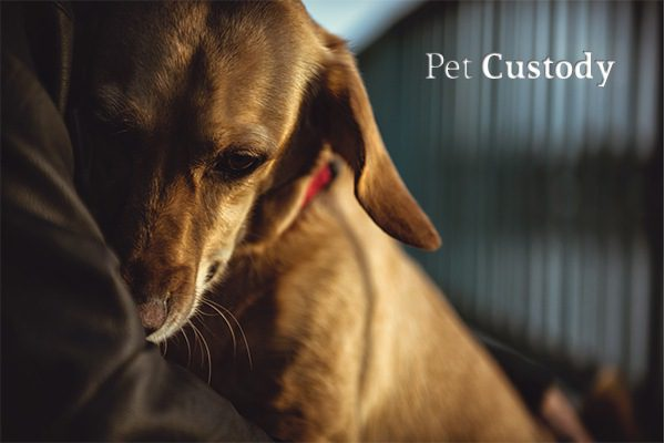 A sad puppy clinging to its owner in the owner's arms beside the words pet custody
