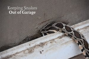 A snake is sneaking into a garage through a crack in the screen with the words, keeping snakes out of garage.