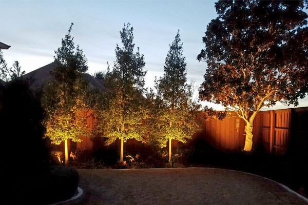 Well-lit trees and fence in backyard at night