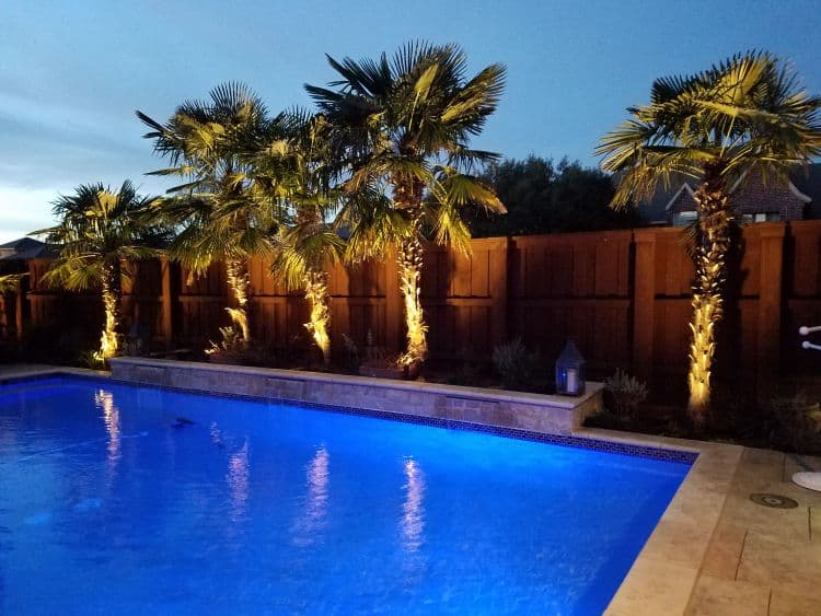 Well-lit pool at dusk surround by palm trees and a privacy fence