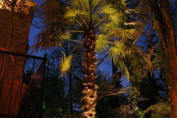 A palm tree is lit up by outdoor lighting placed underneath