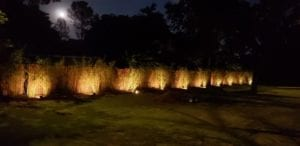 Landscape lighting of small shrubs on a wall