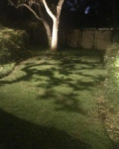 A tree casts a dramatic shadow on a well kept lawn