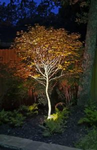 Light fixture illuminating a tree in a garden