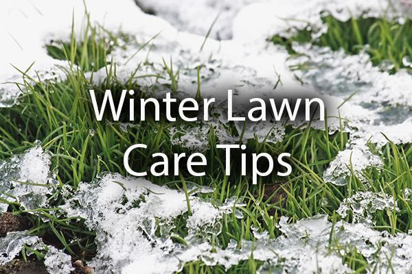 Snow melting on a lawn with the words, winter lawn care tips.