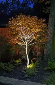 Little tree lit up by outdoor lighting