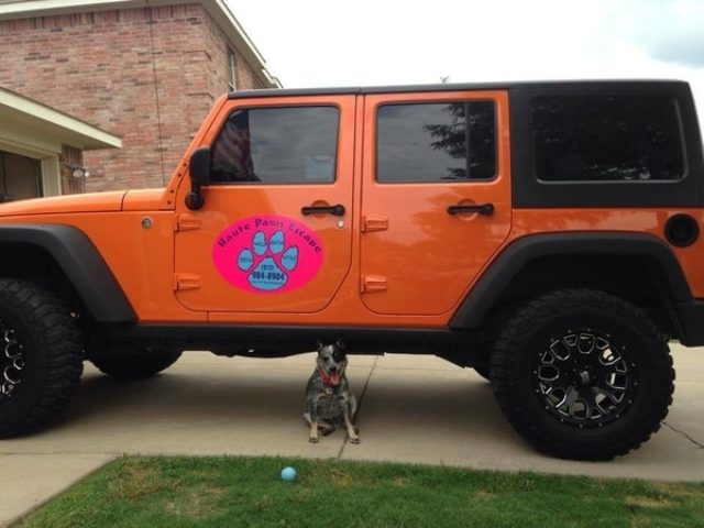 Orange Jeep with pink car magnet for dog daycare company