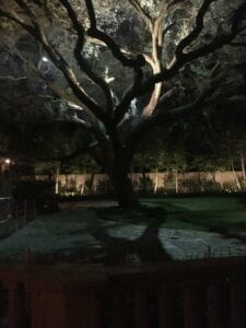 huge tree with lighting up the branches